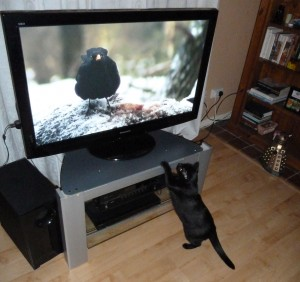cat-watching-the-tv