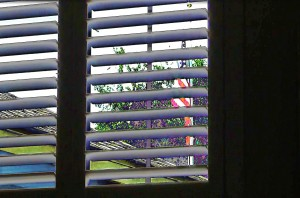 safety standards for window blinds